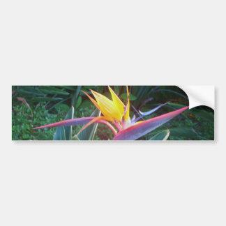 *Bird of Paradise* Bumper Sticker