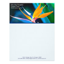 bird-of-paradise business letterhead