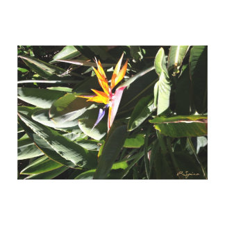 Bird of Paradise Canvas Gallery Wrapped Canvas