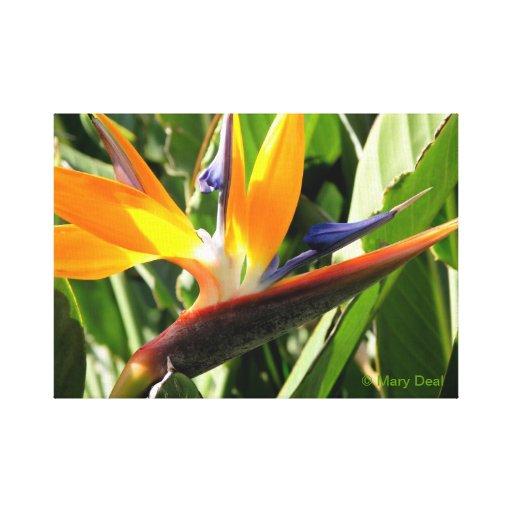 Bird of Paradise Canvas Prints