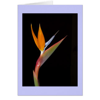 Bird of Paradise Card