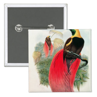 Bird of Paradise, engraved by T. Walter 2 Inch Square Button