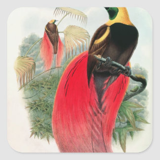 Bird of Paradise, engraved by T. Walter Square Sticker