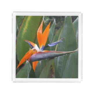 Bird Of Paradise Flower Acrylic Perfume Tray Square Serving Trays