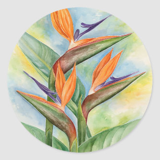 Bird Of Paradise Flower Art - Multi Classic Round Sticker
