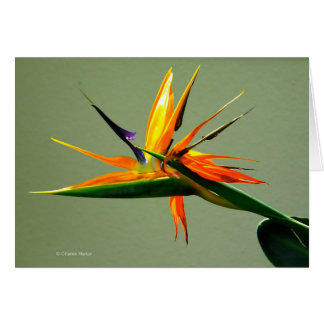 Bird of Paradise Flower Card