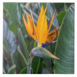 "Bird of Paradise flower ceramic photo tile<br><div class=""desc"">A beautiful photograph of a Bird of Paradise flower printed on a ceramic photo tile.</div>"