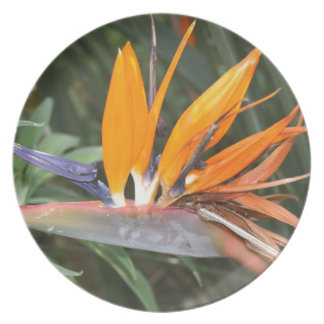 bird of paradise flower melamine plate