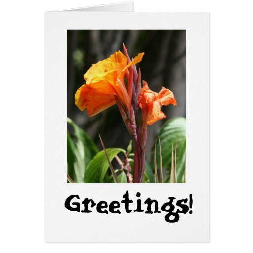 Bird of Paradise Flower Photograph Greeting Card