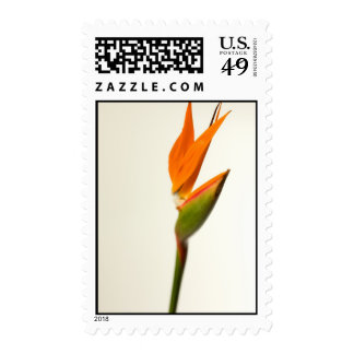 Bird Of Paradise Flower Postage Stamp