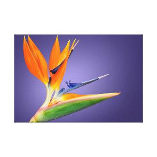 Bird of Paradise flower (Strelitzia reginae) Canvas Print