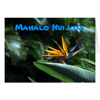 Bird of Paradise Flower Thank You Card