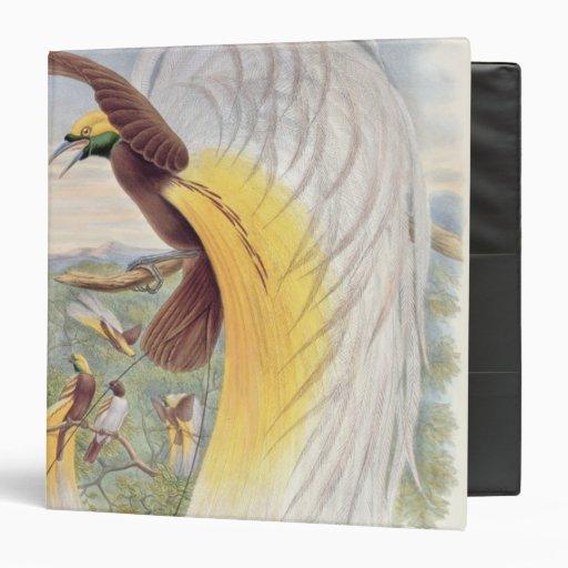 Bird of Paradise, from 'Birds of New Guinea' Binder
