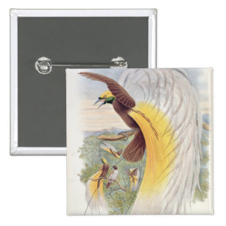 Bird of Paradise, from 'Birds of New Guinea' Pins