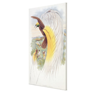 Bird of Paradise, from 'Birds of New Guinea' Canvas Print