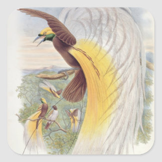 Bird of Paradise, from 'Birds of New Guinea' Square Sticker