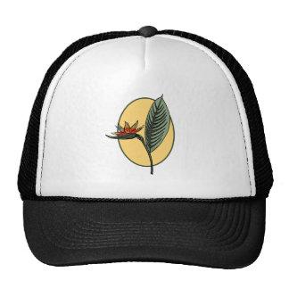 Bird of Paradise Mesh Hats