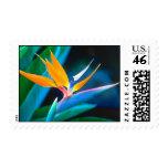 Bird Of Paradise (Hawaii) Postage Stamp