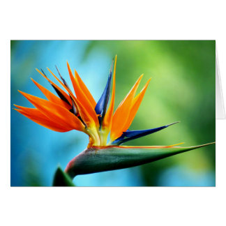 Bird of Paradise I Card