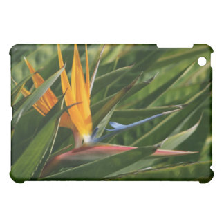 Bird of Paradise  iPad Mini Cases
