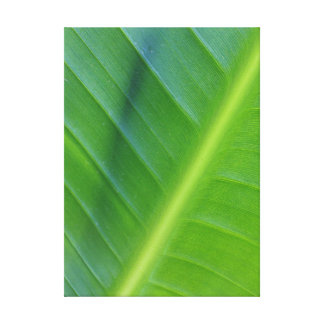 Bird of Paradise Leaf Canvas Print