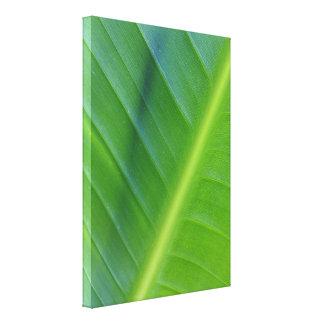 Bird of Paradise Leaf Photo Canvas Print