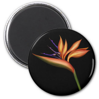 Bird Of Paradise Magnet