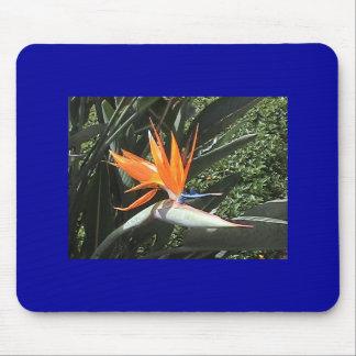 Bird-Of-Paradise Mousepad