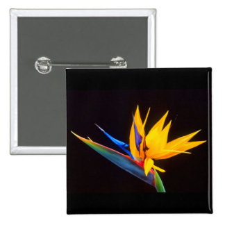Bird of Paradise on Black 2 Inch Square Button
