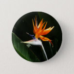 Bird of Paradise Orange Tropical Flower Button