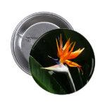 Bird of Paradise Orange Tropical Flower Button