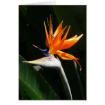 Bird of Paradise Orange Tropical Flower Greeting Card
