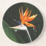 Bird of Paradise Orange Tropical Flower Coaster