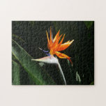 Bird of Paradise Orange Tropical Flower Jigsaw Puzzle