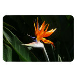 Bird of Paradise Orange Tropical Flower Magnet