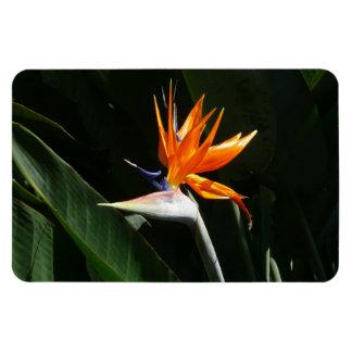 Bird of Paradise Orange Tropical Flower Magnet