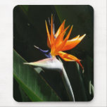 Bird of Paradise Orange Tropical Flower Mouse Pad