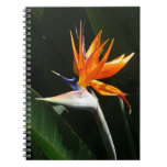 Bird of Paradise Orange Tropical Flower Spiral Note Books