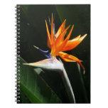 Bird of Paradise Orange Tropical Flower Spiral Notebook