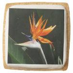 Bird of Paradise Orange Tropical Flower Square Shortbread Cookie