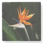 Bird of Paradise Orange Tropical Flower Stone Coaster