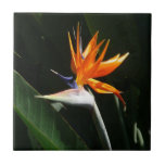 Bird of Paradise Orange Tropical Flower Tile