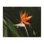 Bird of Paradise Orange Tropical Flower Wood Print