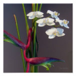 Bird-of-Paradise Orchids Poster