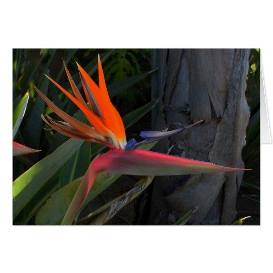 Bird of Paradise Photo Card