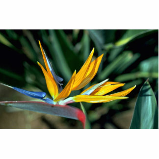 Bird of paradise acrylic cut outs