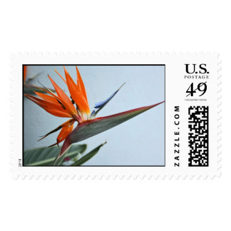 Bird of Paradise Postage Stamp
