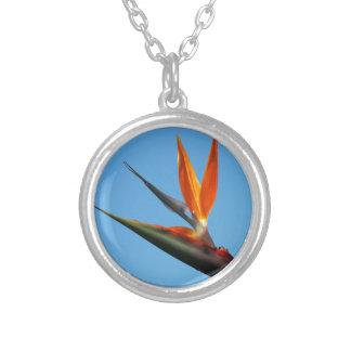 Bird of Paradise Round Pendant Necklace