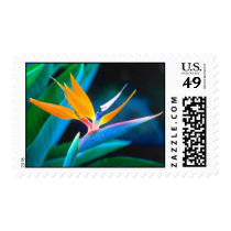 Bird of Paradise Stamps