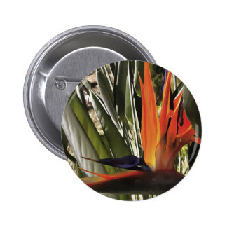 Bird of Paradise (Strelitzia) Button